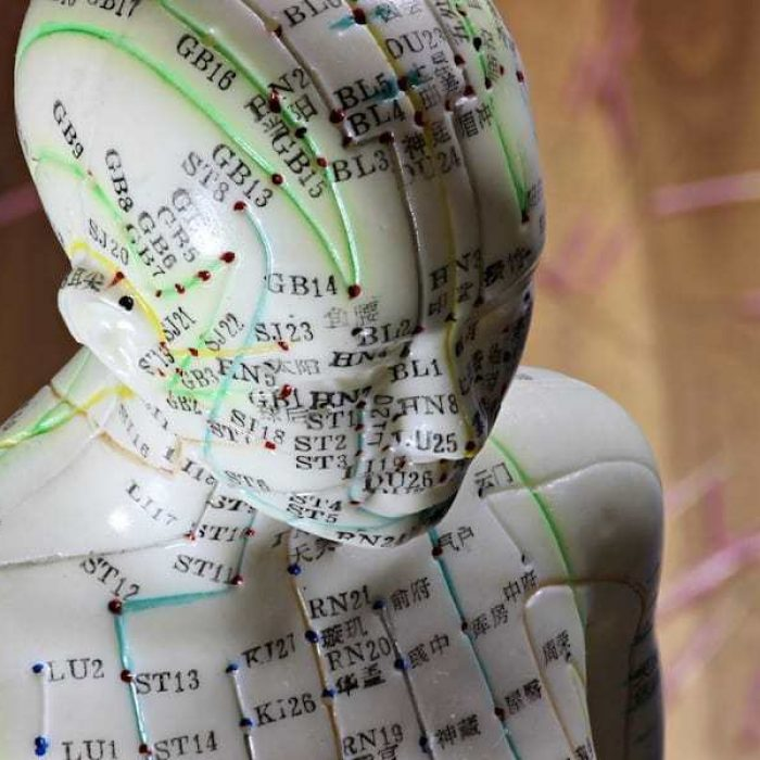 female acupuncture model on desktop